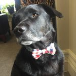 handsome dog bow tie